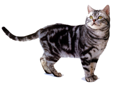 Кандидат у мери Рима обіцяє виборцям привезти 500 тисяч кішок