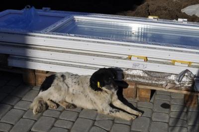 Центр стерилізації собак у Чернівцях є, але ще не працює