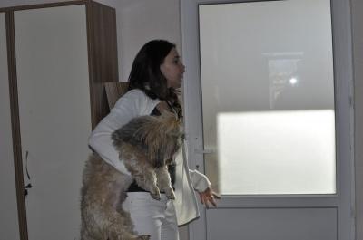 Керівник притулку для тварин у Чернівцях ще не обрав собі заступника