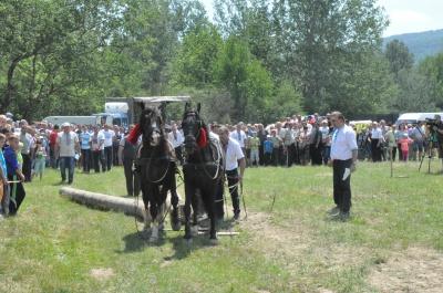 Найсильніші коні тягнули колоди під час фестивалю на Буковині (ФОТО)