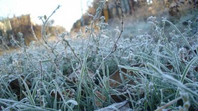 На Путильщині — заморозки, померзла городина