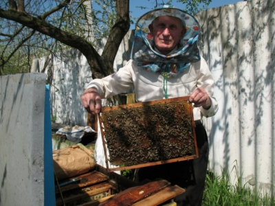 На Буковині буде мало меду через холодну і дощову весну