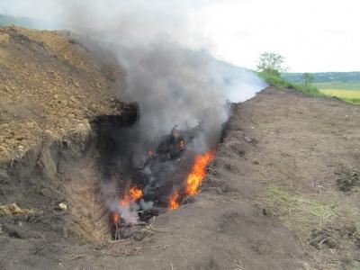"""""""Дивитися на це важко - тут знищили 2000 свиней"""". Репортаж із села на Буковині, де введено карантин"""