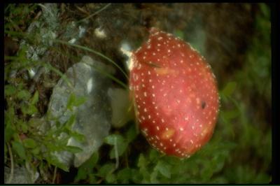 На Буковині ще троє людей отруїлися грибами