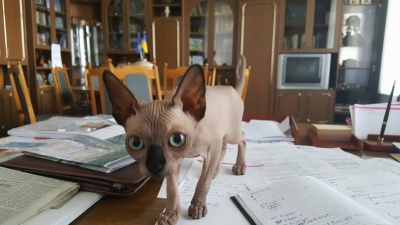 У кабінеті мера Чернівців оселився кіт зі Слов'янська