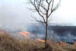 На Буковині масово горить суха трава
