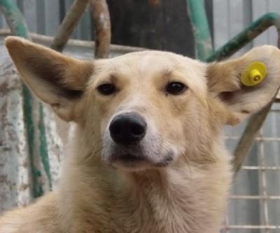 Безпритульних і домашніх собак у Чернівцях стерилізують безкоштовно