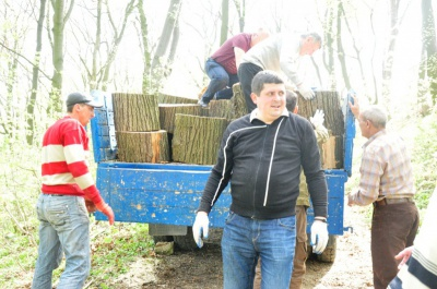 Двоє нардепів з Буковини потрапили до списку володарів найбільшої кількості автівок у Раді
