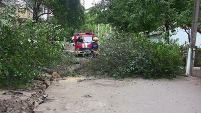 У Чернівцях на бульварі дерево впало на дорогу