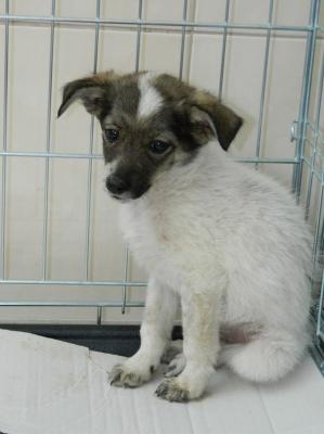 У притулку для тварин у Чернівцях роздають собак та котів (ФОТО)