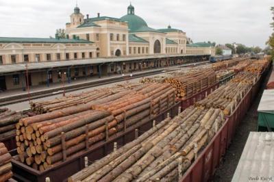 Майже усі лісоматеріали, які йдуть із Буковини на експорт - дрова, - лісівники