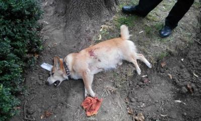 У Чернівцях застрелили собаку - поліція розслідуватиме справу (ФОТО)