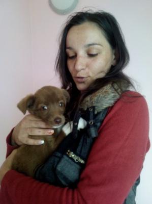 Господарів знайшли шість тваринок з притулку в Чернівцях (ФОТО)