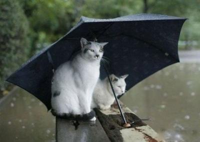 На Буковині - спека і дощ