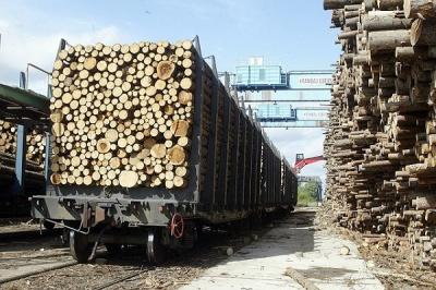 Переміщення лісу за кордон скоротилось у 5 разів, - Чернівецька митниця