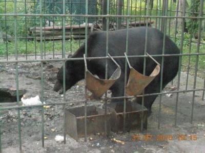 На Буковині без їжі та води тримають у клітці ведмедя