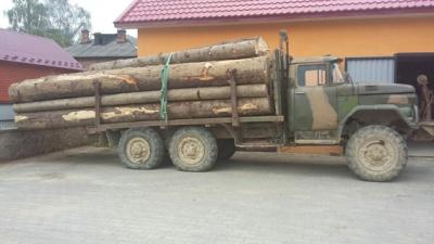 Поліція затримала буковинця, який вкрав 12 кубів лісу