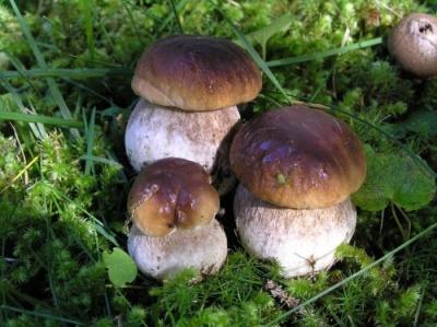 На Буковині семеро людей отруїлися грибами