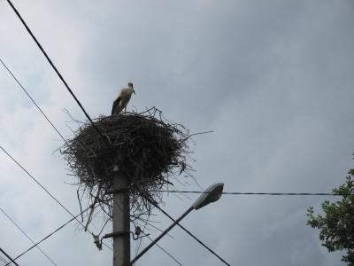 Птахи вже готуються відлітати у вирій