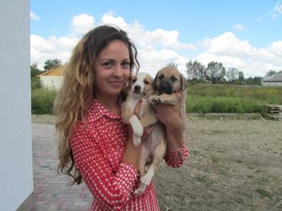 Мешканці притулку для тварин у Чернівцях: вівчарка-поліцейська та «гроза» спального району (ФОТО)