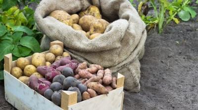 Урожай овочів на Буковині поганий: можуть зрости ціни