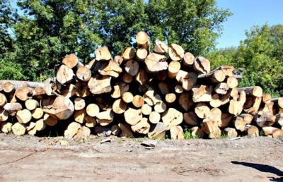 На Буковині на приватній пилорамі знайшли необлікований ліс