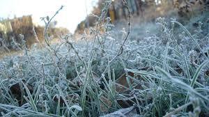 На Буковині зафіксували перші заморозки