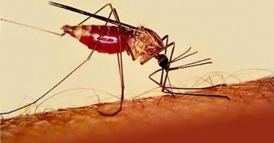 У Чернівцях студент захворів на малярію