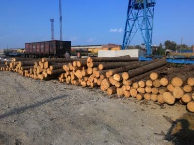 Через кордон на Буковині везли 60 кубів лісу за підробленими документами