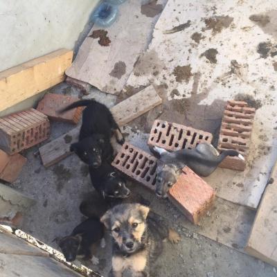 """""""Притулок для тварин"""" у Чернівцях шукає волонтерів для термінового облаштування додаткових вольєрів"""