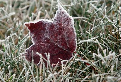 На Буковині очікуються нічні заморозки