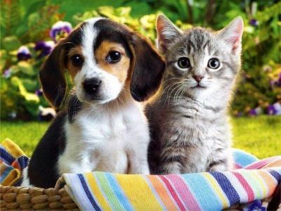 У Чернівцях безкоштовно реєструють домашніх тварин