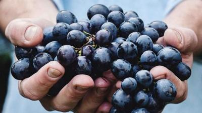 Ученые назвали важную функцию винограда для здоровья