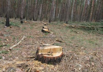 Суд оштрафував Національний парк на Буковині через незаконну вирубку