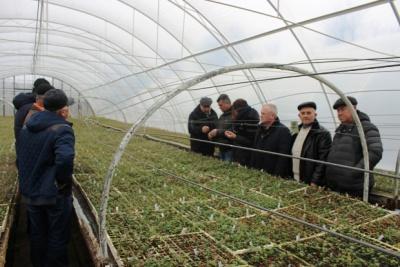 На Буковині фермери планують вирощувати чорницю
