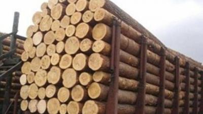 На экспорт пропускаем только дрова топливные - таможня Буковины