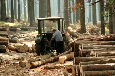 Кицманское лесное хозяйство уверяет, что рубка леса является законной
