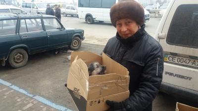 Волонтери роздають тварин на ринках у Чернівцях
