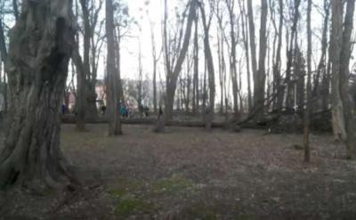 В парке Шевченко в Черновцах дерево упало в 5 метрах от людей