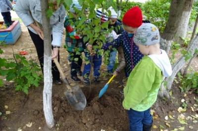 У Чернівцях дітей з батьками запрошують садити дерева