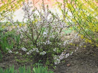 В школьном дендропарке в Черновцах зацвели цветы и деревья (ФОТО)