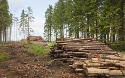 Лісництво відшкодує державі півмільйона за незаконну вирубку лісу на Буковині