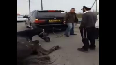 В Умані шкуродери прив'язали коня до BMW X5 і на швидкості тягли його по трасі