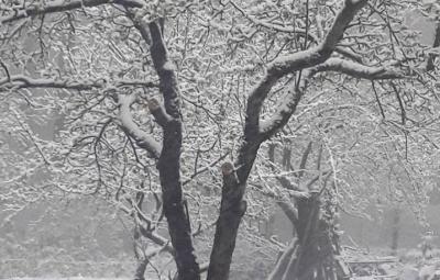 Окраины Черновцов и некоторые районы Буковины засыпало снегом (ФОТО)