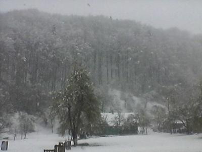 Буковинские Карпаты засыпало снегом: местные жители встряхивают снег с цвета на деревьях (ФОТО)