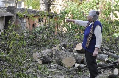 «Приехали, срезали, покидали»: в центре Черновцов срубили полувековой дерева (ФОТО)