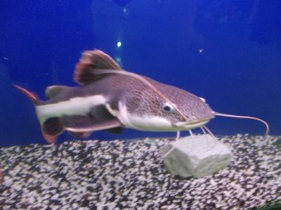 В Черновцы везут экзотических рыбок