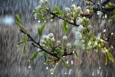 В выходные в Черновцах дождливо