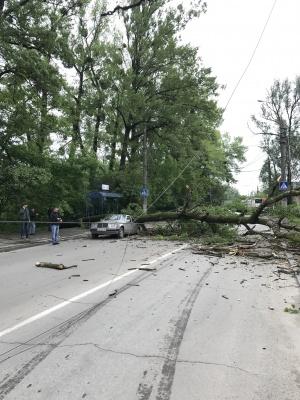У Чернівцях громіздке дерево впало на автомобіль, з якого перед цим вийшли мама з дитиною (ФОТО)