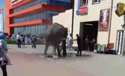 У Чернівцях слона помили в автомийці: з'явилося кумедне відео